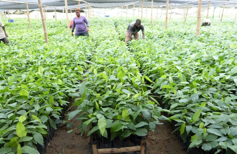 Imo Farmers Benefit From 20,000 Cocoa Seedlings By FG